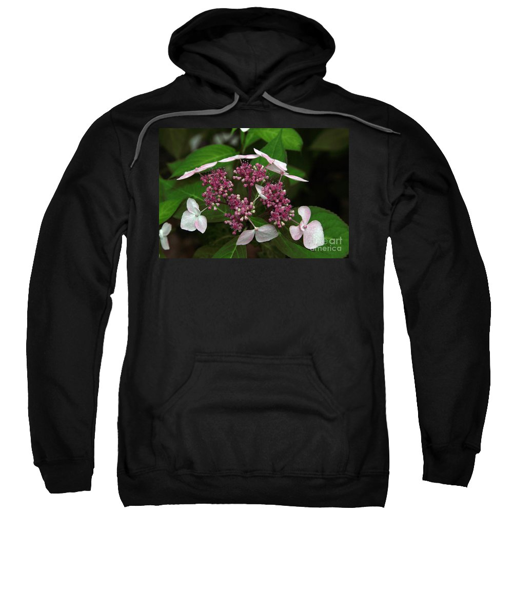 Hydrangea Sweatshirt featuring the photograph Lovely by Amanda Barcon