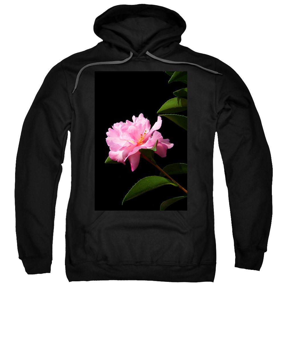 Flower Sweatshirt featuring the photograph Lovely Pink Camelia by Laurie Paci