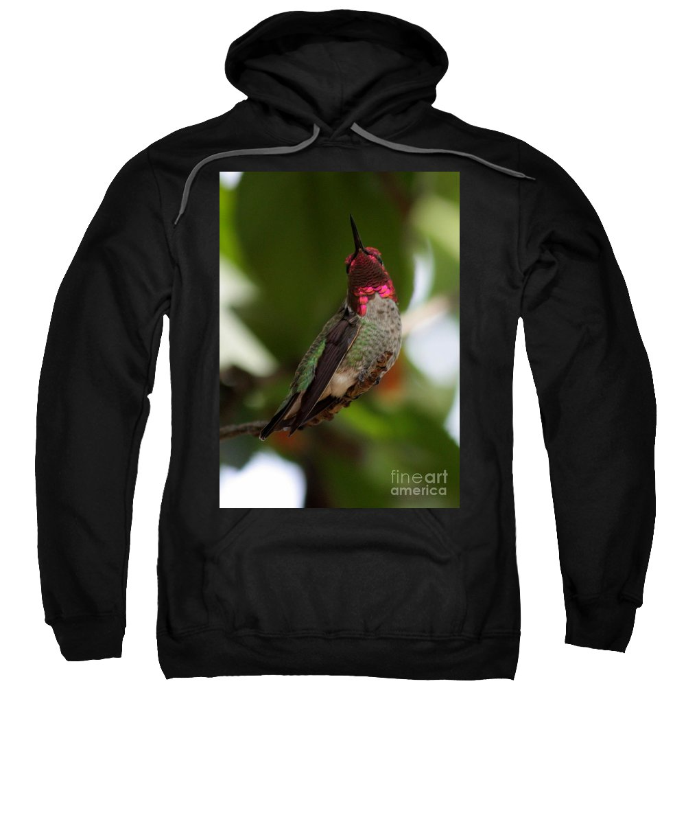 Hummingbird Sweatshirt featuring the photograph Lovely Ruby Red by Carol Groenen