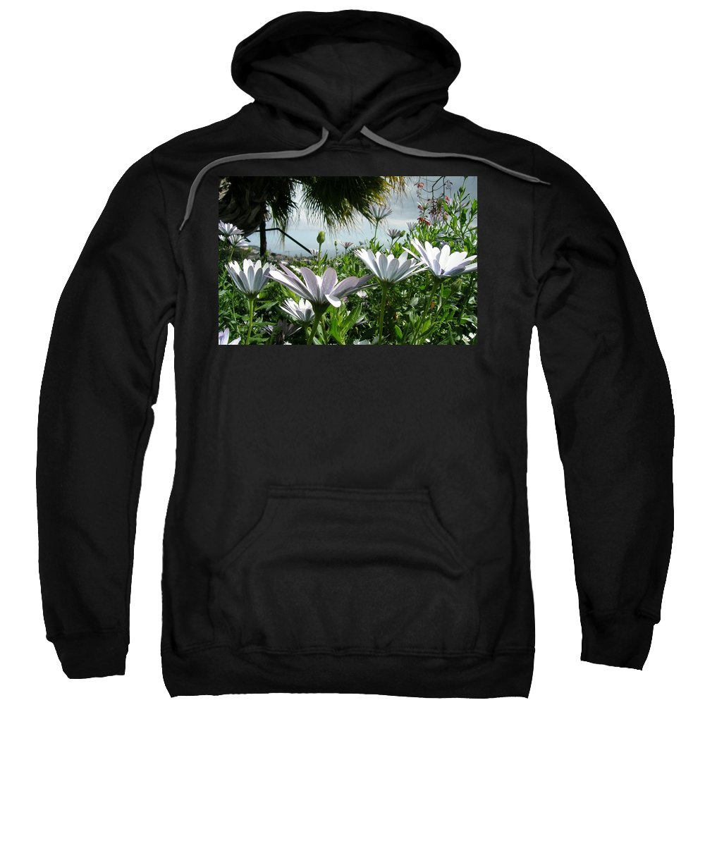 Landscape Sweatshirt featuring the photograph Madeira Daisies by Valerie Ornstein