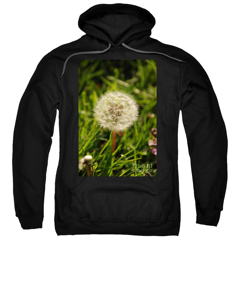 Dandelion Sweatshirt featuring the photograph Make A Wish by Ashley O