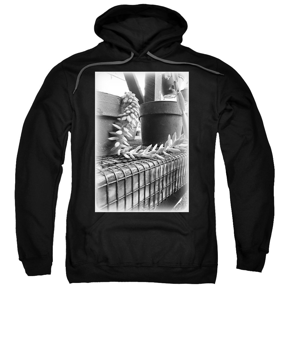 Plant Sweatshirt featuring the photograph Manago Succulent by Lori Seaman