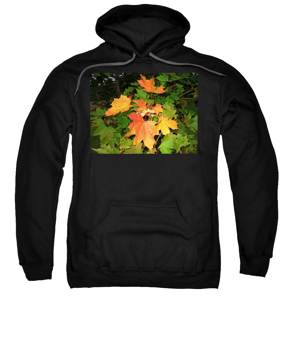 Maple Leaves Sweatshirt featuring the photograph Maple Mania 10 by Will Borden