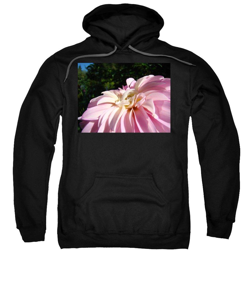 Dahlia Sweatshirt featuring the photograph Master Gardener Pink Dahlia Flower Garden Art Prints Canvas Baslee Troutman by Baslee Troutman
