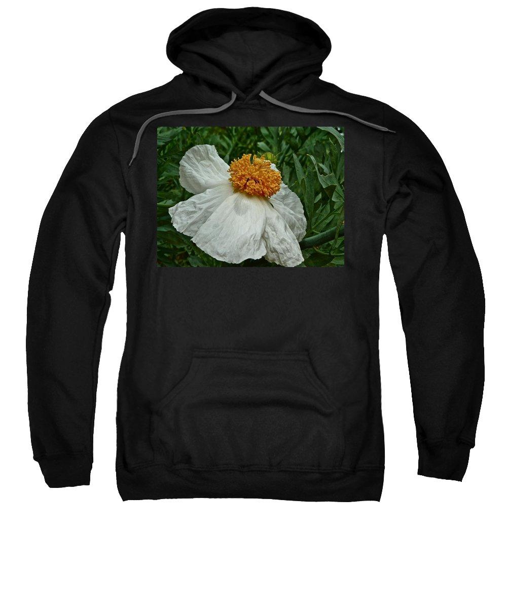 Flowers Sweatshirt featuring the photograph Matilija Poppy Four by Diana Hatcher