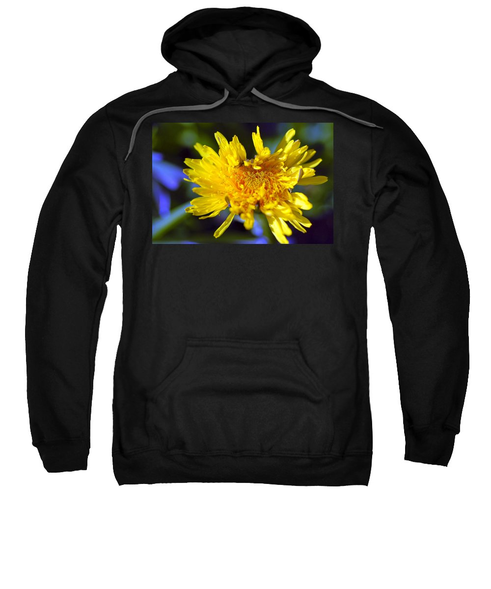 Flower Sweatshirt featuring the photograph Mello Yello by Stephen Anderson