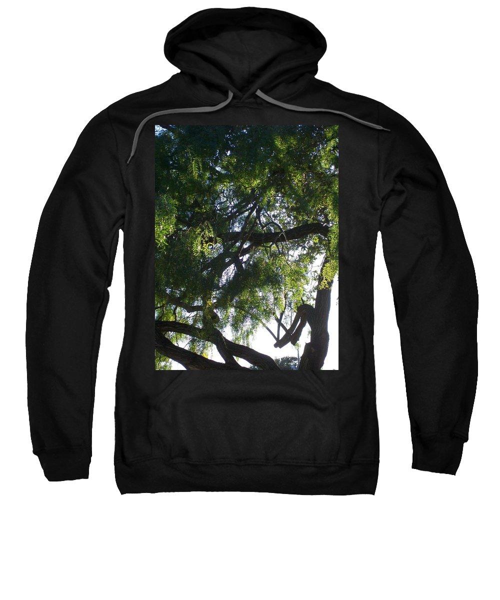 Mesquite Tree Sweatshirt featuring the photograph Mesquite Tangle by Laurette Escobar