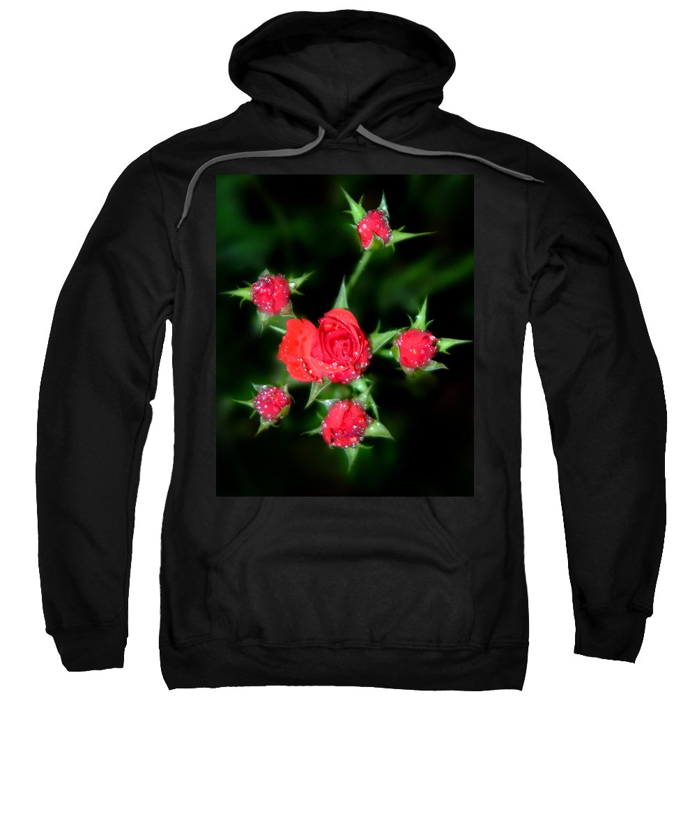Roses Sweatshirt featuring the photograph Mini Roses by Anthony Jones