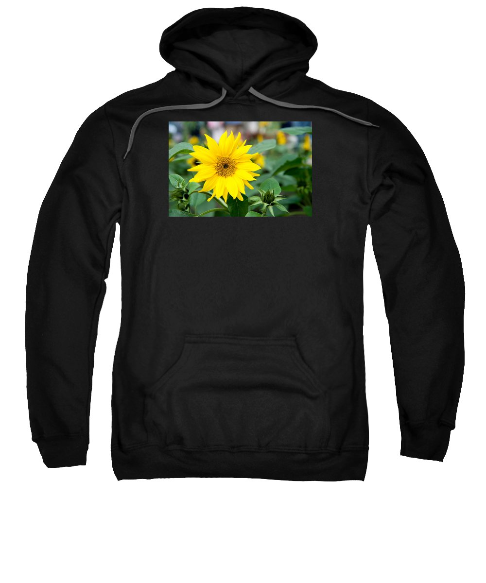 Sunflower Sweatshirt featuring the photograph Mini Sunflower And Bud by Helen Northcott