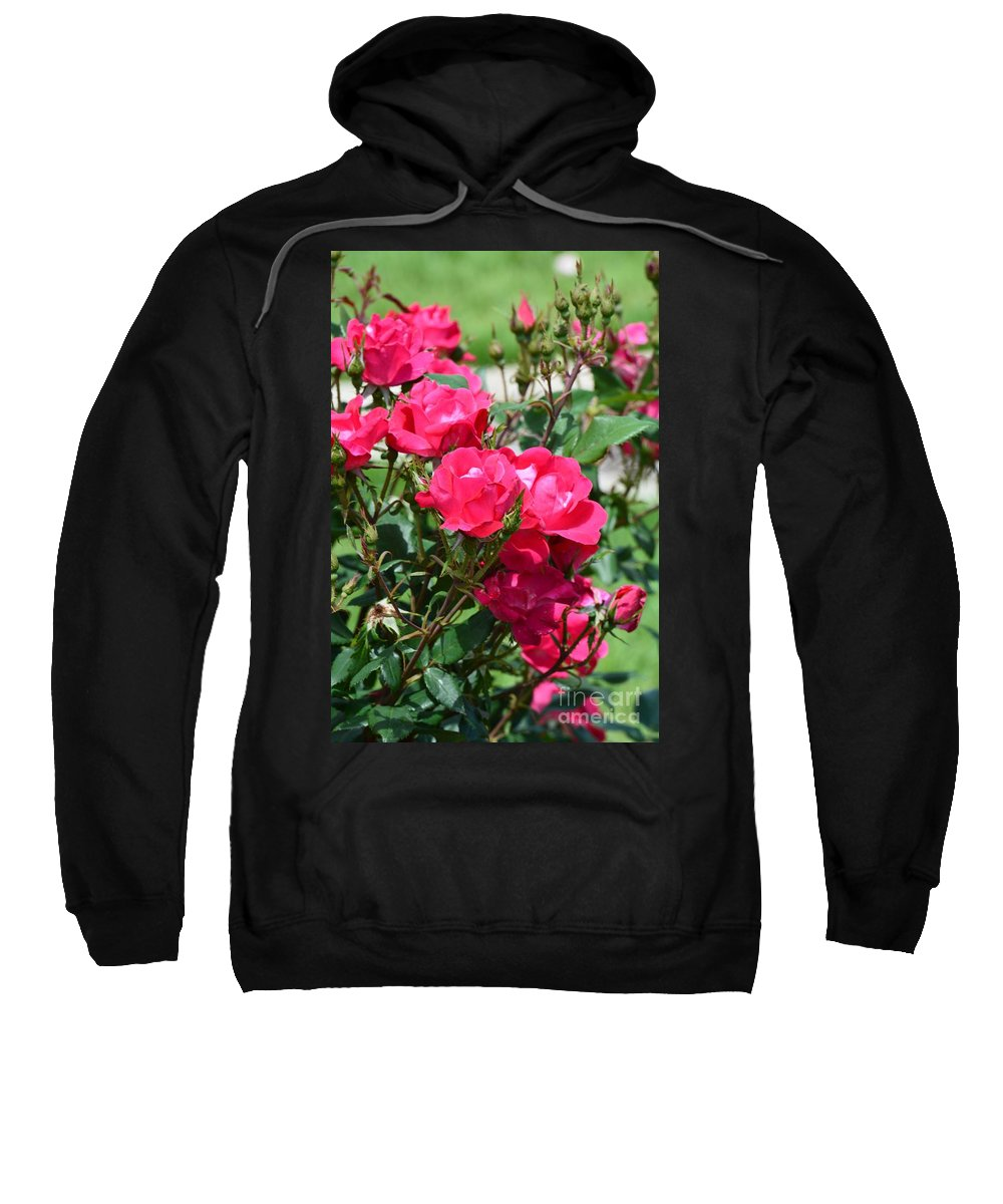 Miniature Roses Sweatshirt featuring the photograph Miniature Roses by Maria Urso