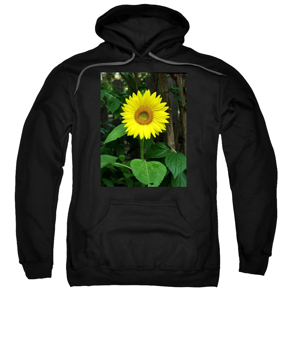 Yellow Sweatshirt featuring the photograph Miss Sunshine by Carol Sweetwood