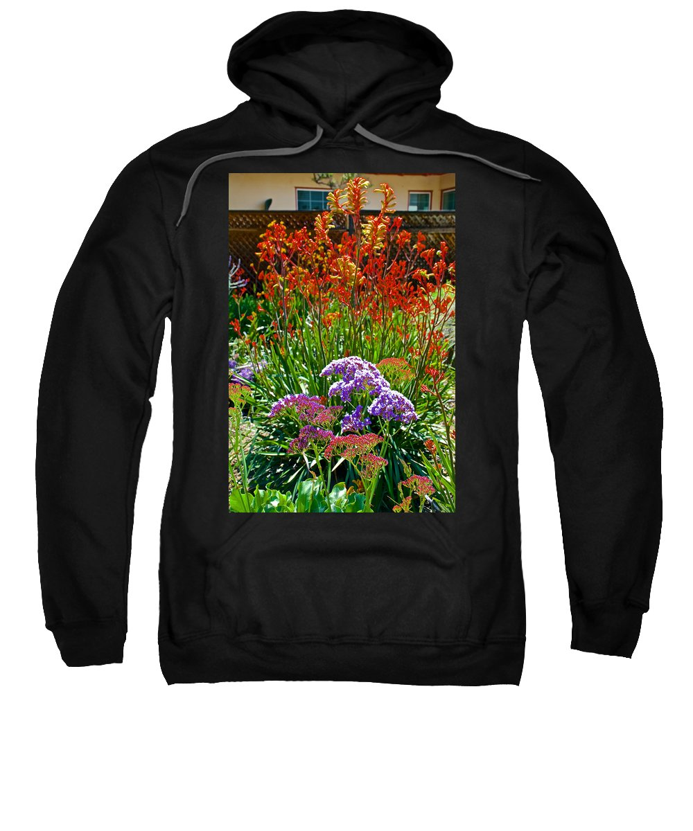 Yellow-orange Kangaroo Paws And Sea Lavender In Front Of Napier Common Room At Pilgrim Place In Claremont Sweatshirt featuring the photograph Yellow-orange Kangaroo Paws And Sea Lavender By Napier At Pilgrim Place In Claremont-california by Ruth Hager