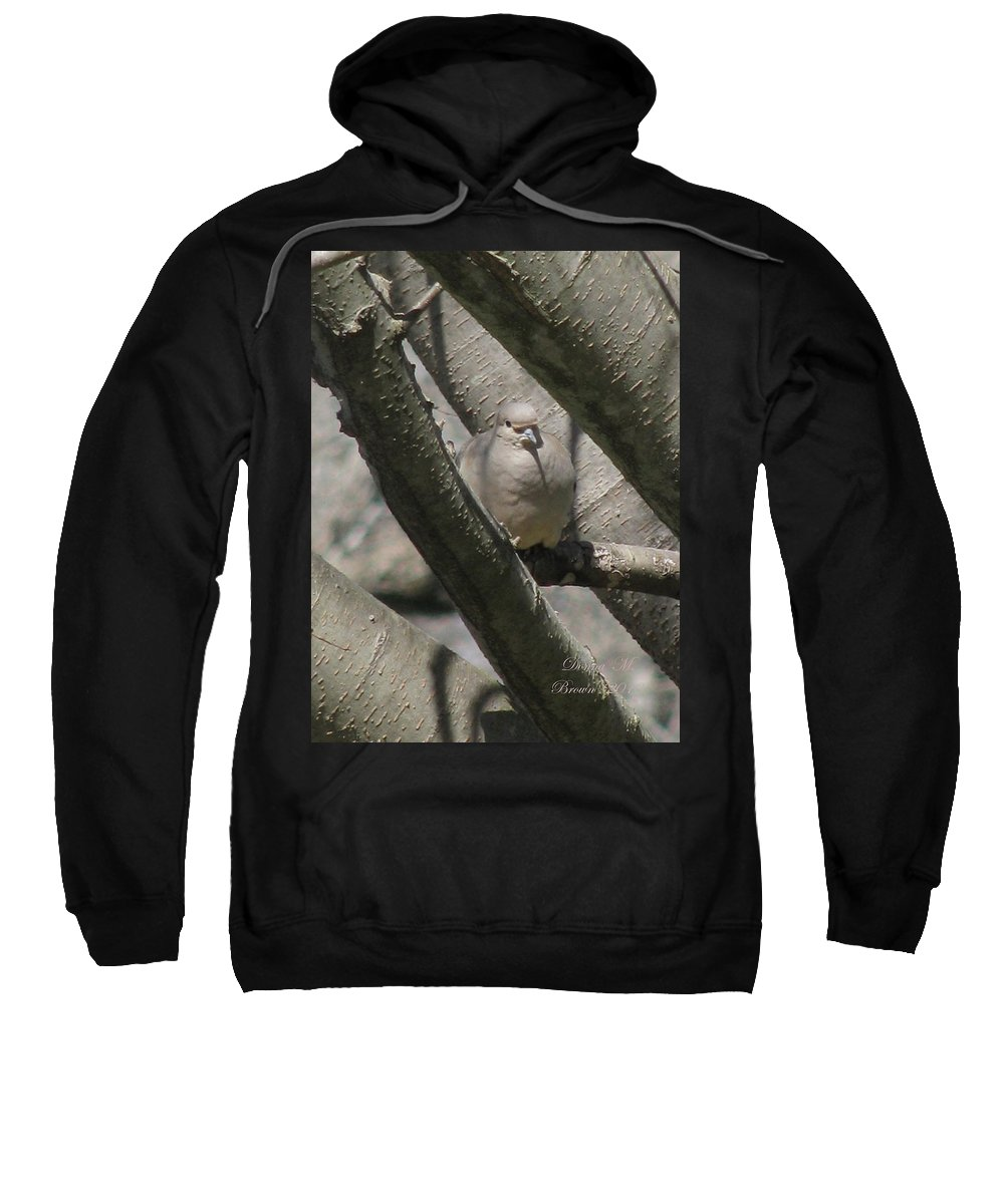 Bird Sweatshirt featuring the photograph Morning Dove by Donna Brown