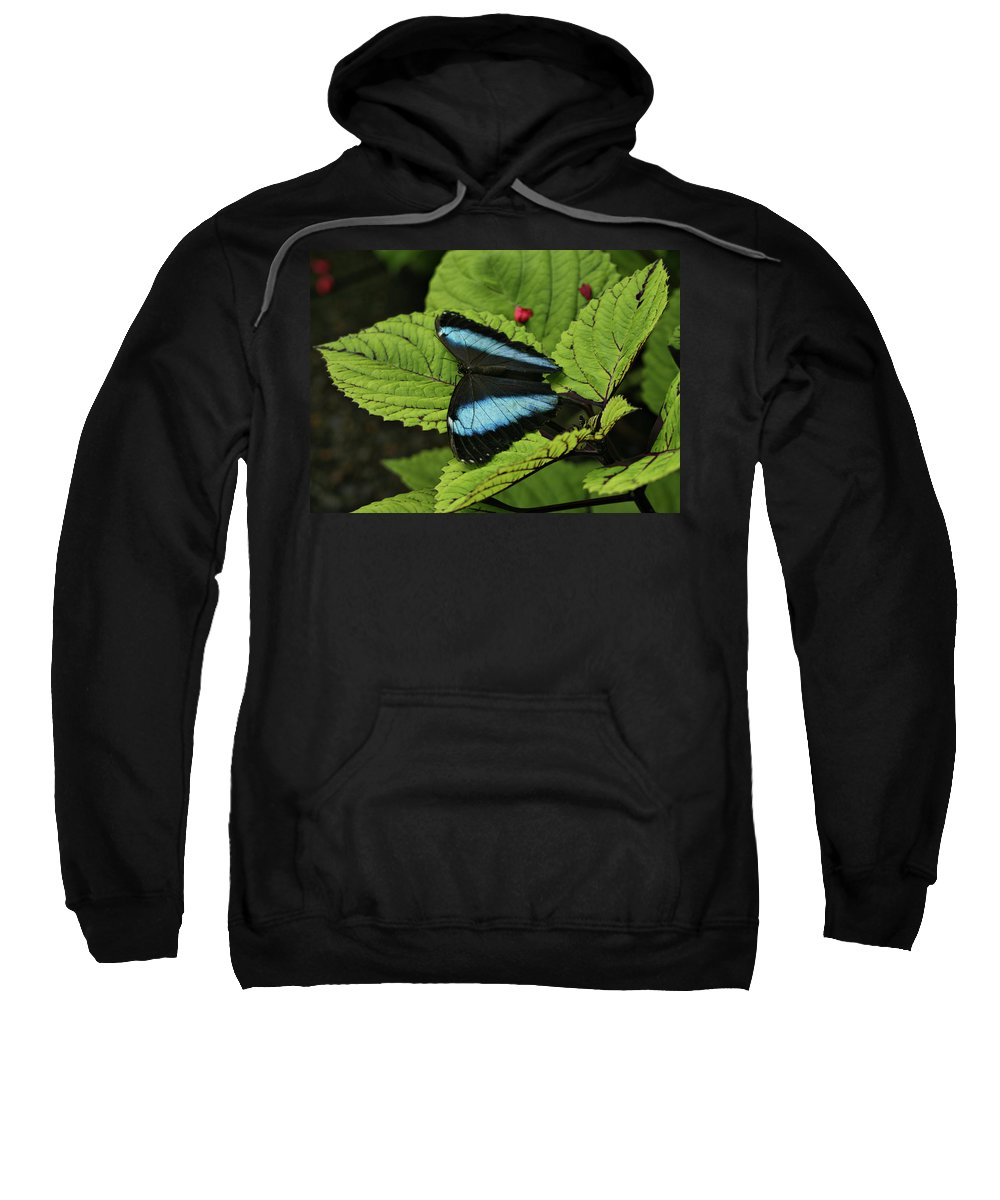 Butterfly Sweatshirt featuring the photograph Morpho Butterfly by Sandy Keeton