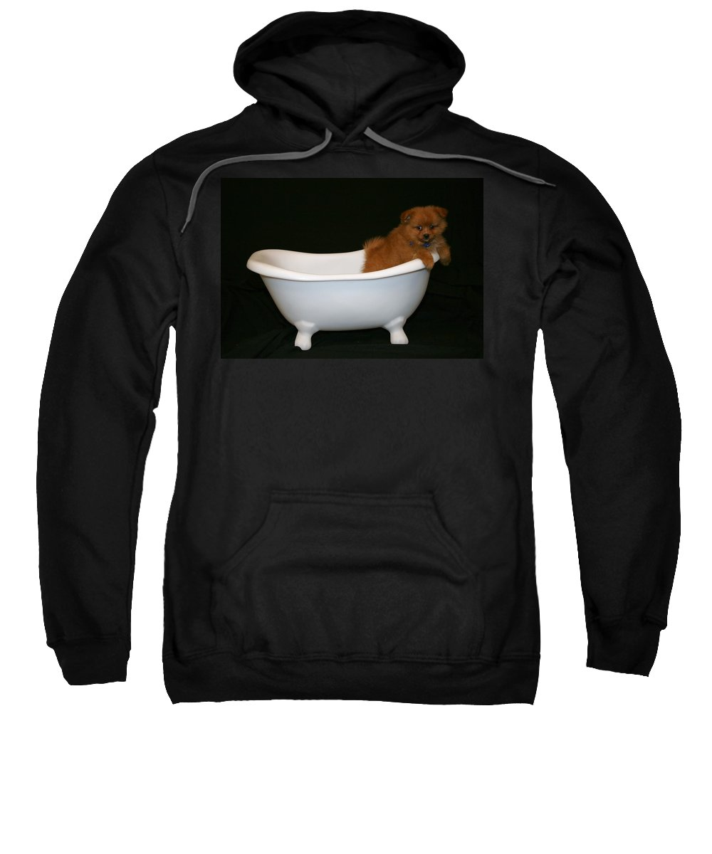 Puppy Sweatshirt featuring the photograph Mr. Fox by Tina Meador