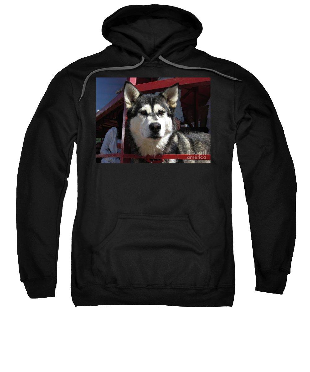 Husky Sweatshirt featuring the photograph Mr. Husky by Lori Tambakis