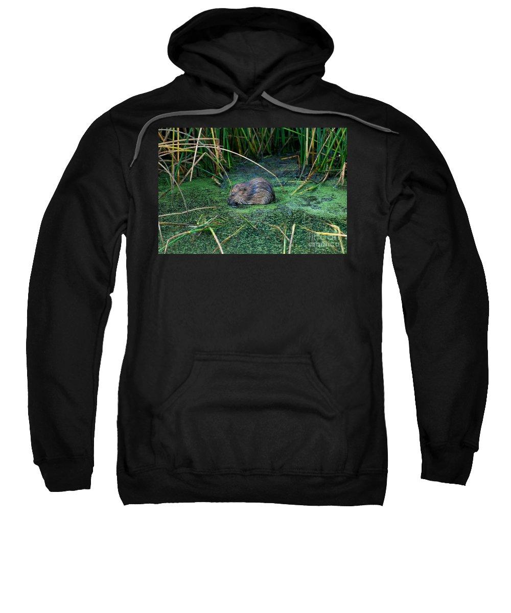 Muscrat Sweatshirt featuring the photograph Mr. Muscrat by Todd Hostetter