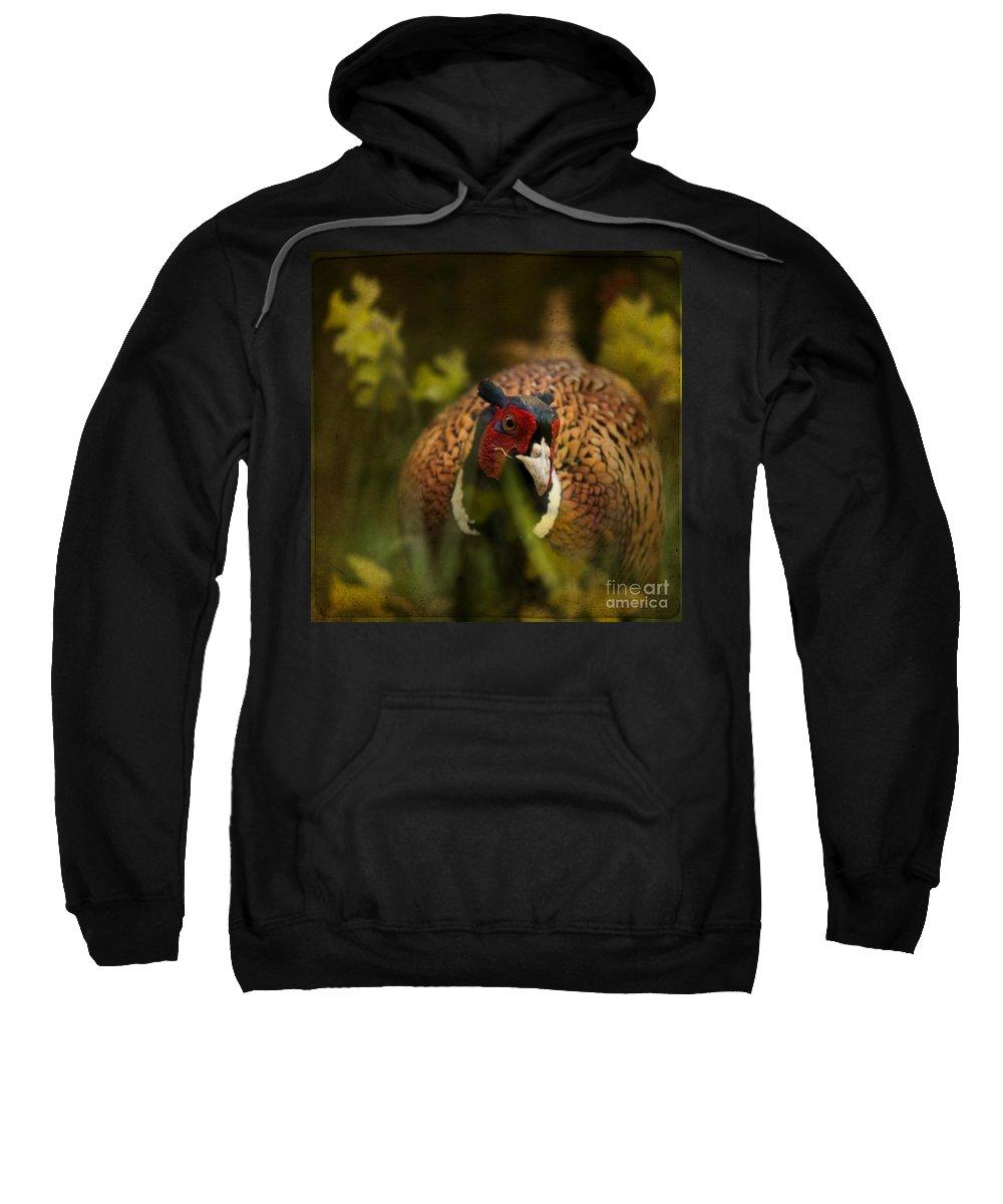 Pheasant Sweatshirt featuring the photograph Mr Spring by Angel Ciesniarska