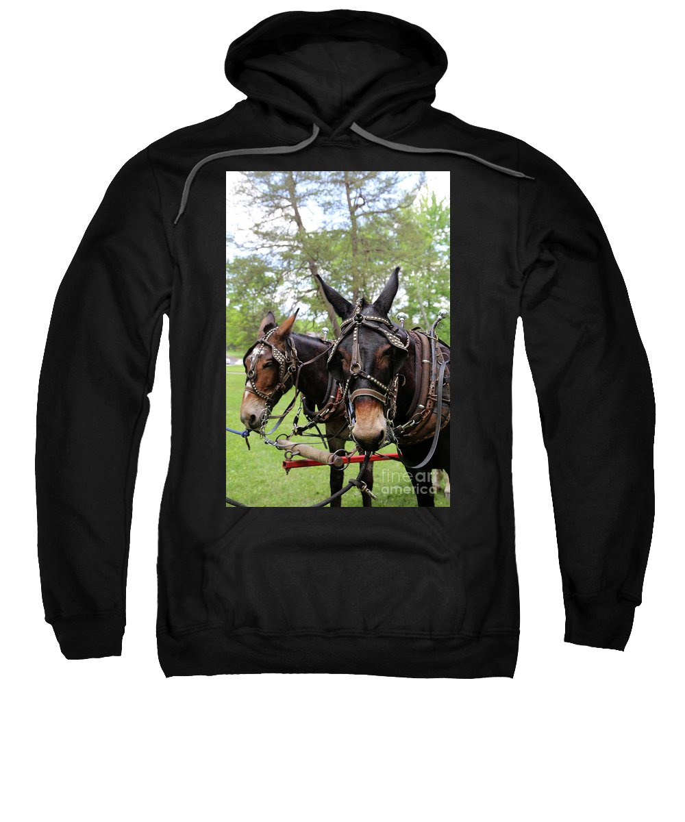 Mule Sweatshirt featuring the photograph Mule Days 2 by Dwight Cook
