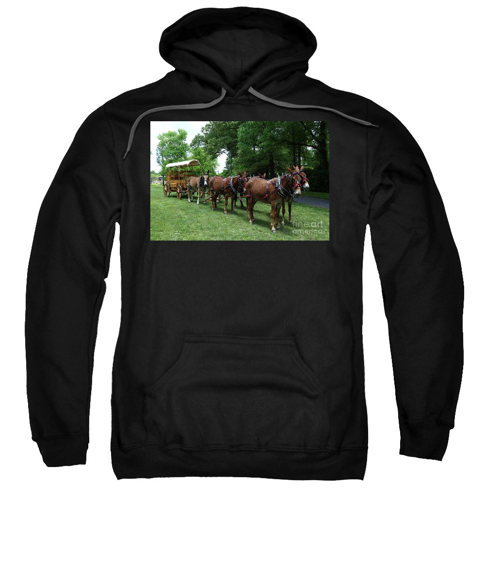 Mule Sweatshirt featuring the photograph Mule Team by Dwight Cook
