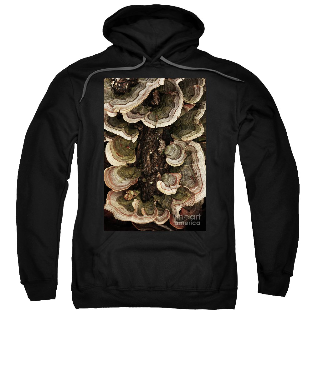 Mushroom Photography Sweatshirt featuring the photograph Mushroom Shells By The Lake Shore by Kim Henderson