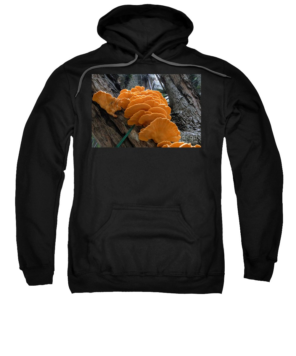 Fungi Sweatshirt featuring the photograph Myakka Fungi by David Lee Thompson