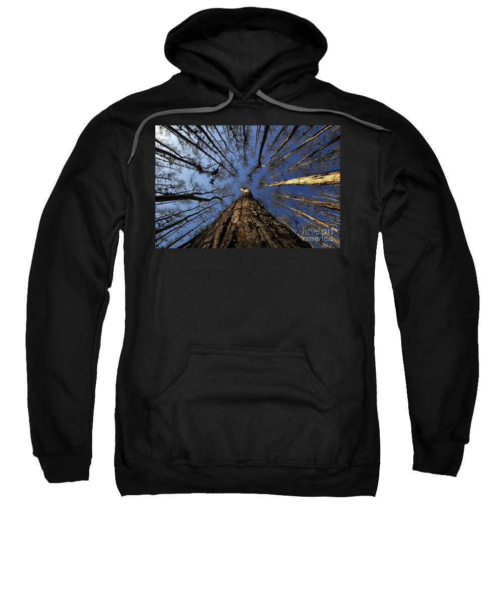 Bald Cypress Trees Sweatshirt featuring the photograph Naked Cypress by David Lee Thompson