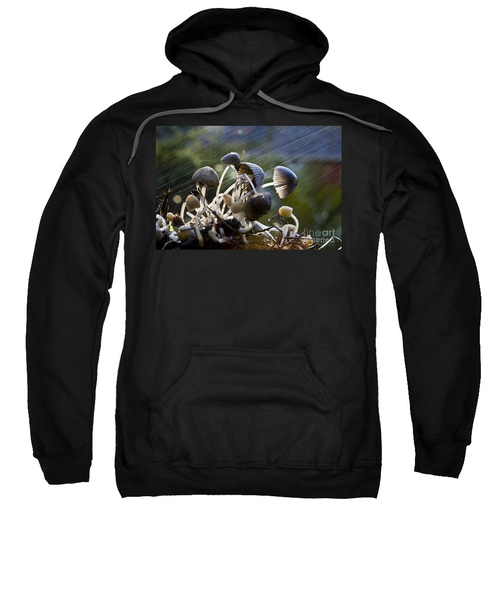 Mushrooms Rain Showers Umbrellas Nature Fungi Sweatshirt featuring the photograph Nature by Sheila Smart Fine Art Photography