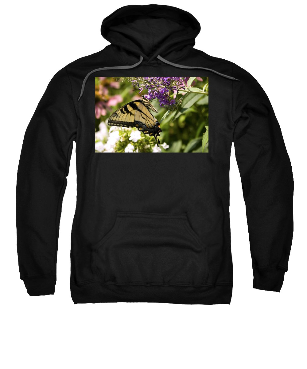 Butterfly Sweatshirt featuring the photograph Nature's Canvas by Scott Wyatt