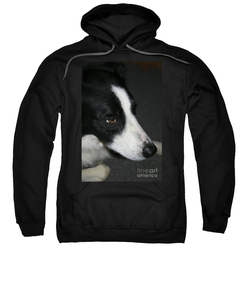 Dog Sweatshirt featuring the photograph New Dog Friend by Deborah Benoit