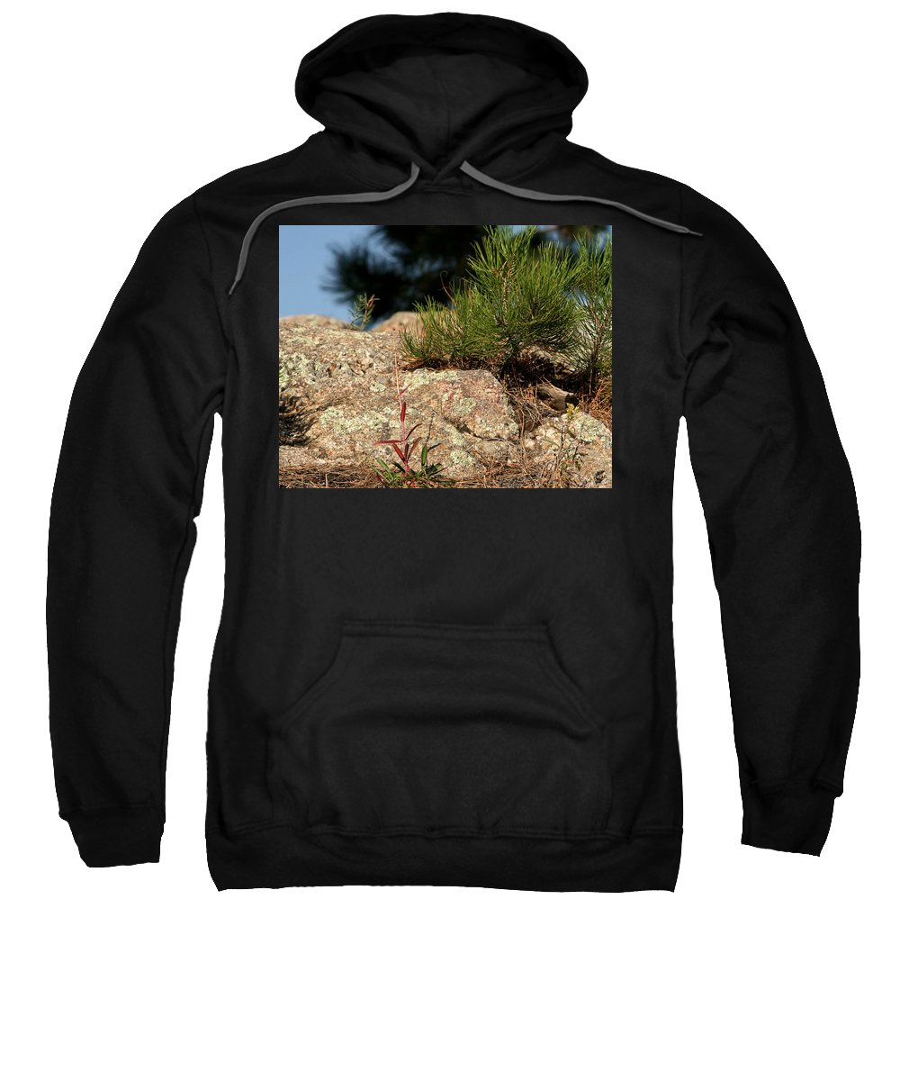 Attraction Sweatshirt featuring the photograph New Growth by Mike Oistad