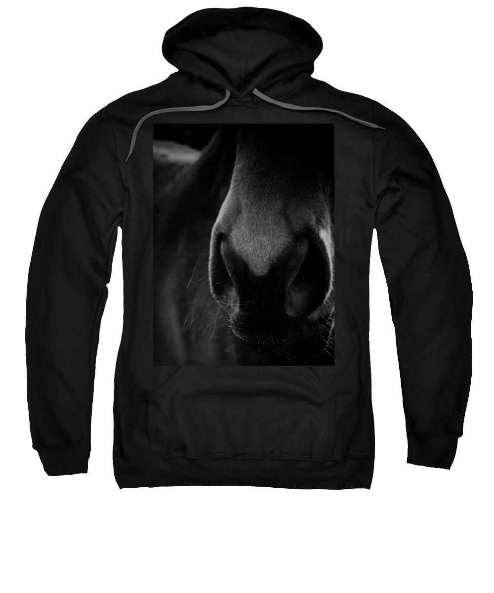 Horse Sweatshirt featuring the photograph Nose Best by Hannah Breidenbach