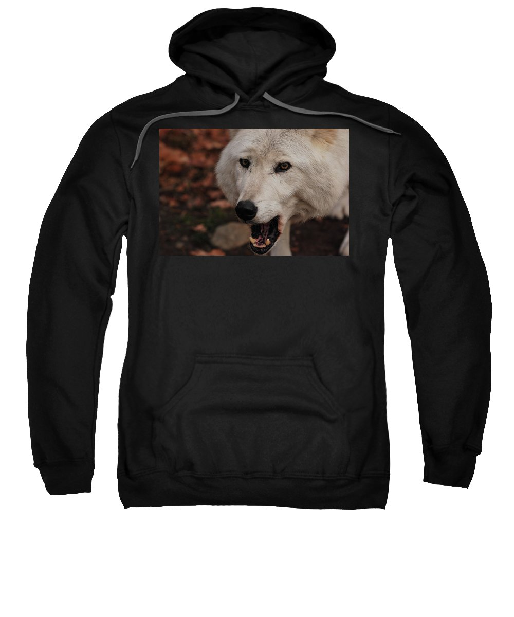 Wolf Sweatshirt featuring the photograph Not A Happy Face by Lori Tambakis