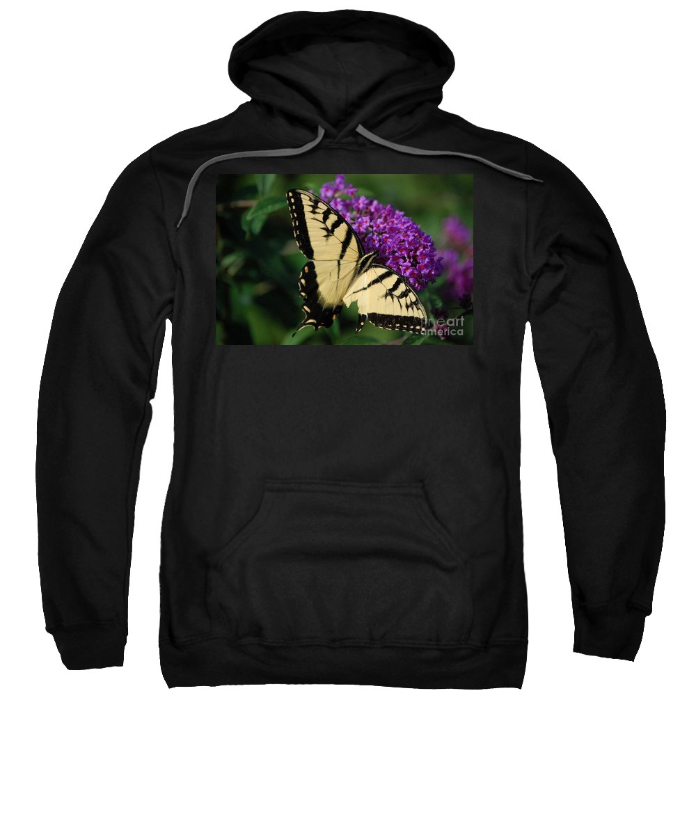 Butterfly Sweatshirt featuring the photograph Nothing Is Perfect by Debbi Granruth