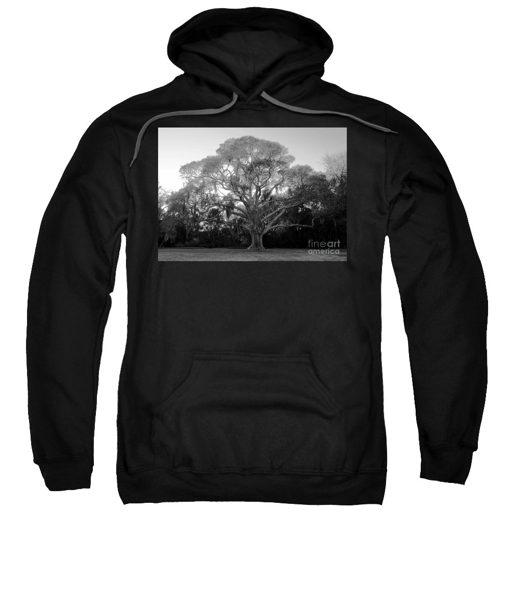 Oak Tree Sweatshirt featuring the photograph Oak Tree by David Lee Thompson