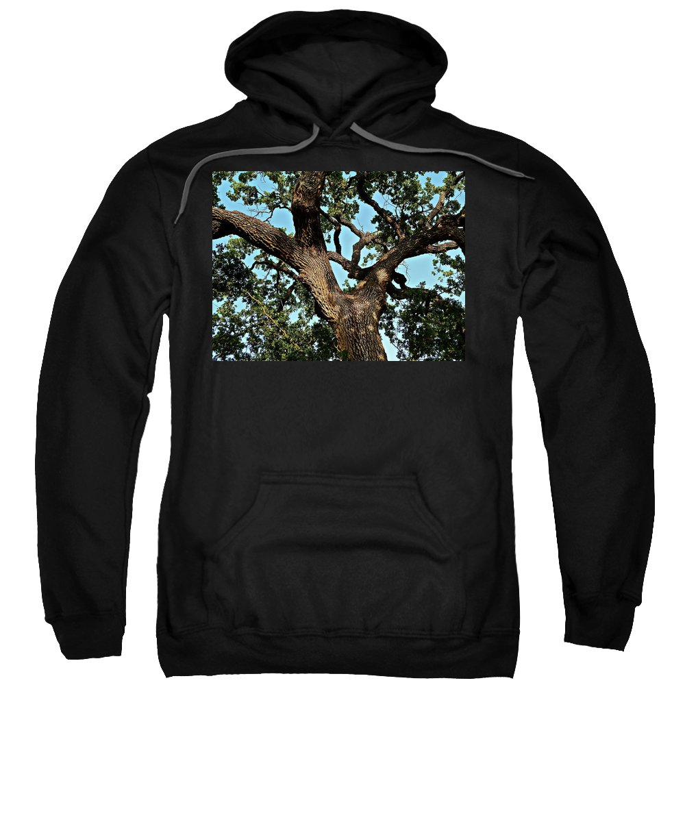 Trees Sweatshirt featuring the photograph Oak Tree Two by Diana Hatcher