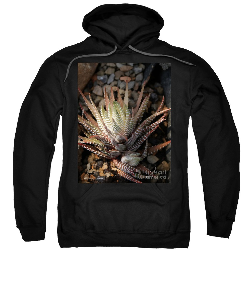 Cacti Sweatshirt featuring the photograph Octo Cacti by Shelley Jones