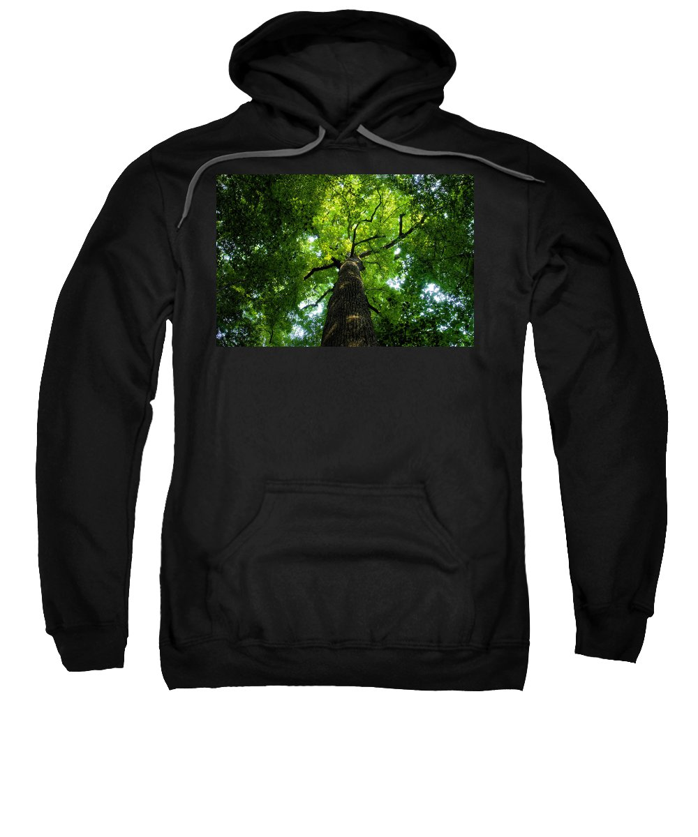 Old Growth Forest Sweatshirt featuring the painting Old Growth by David Lee Thompson