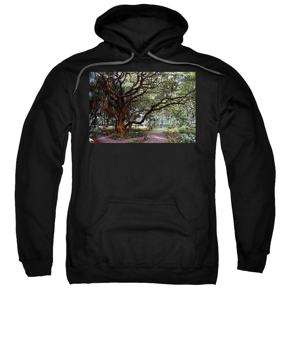 Trees Sweatshirt featuring the photograph Old Tree by Galeria Trompiz