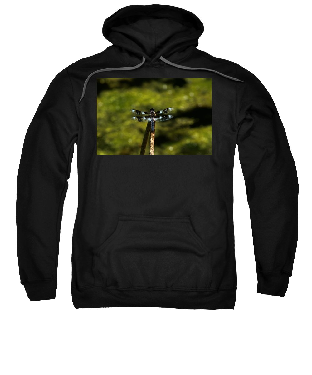 Dragonfly Sweatshirt featuring the photograph On A Stick by Linda Kerkau