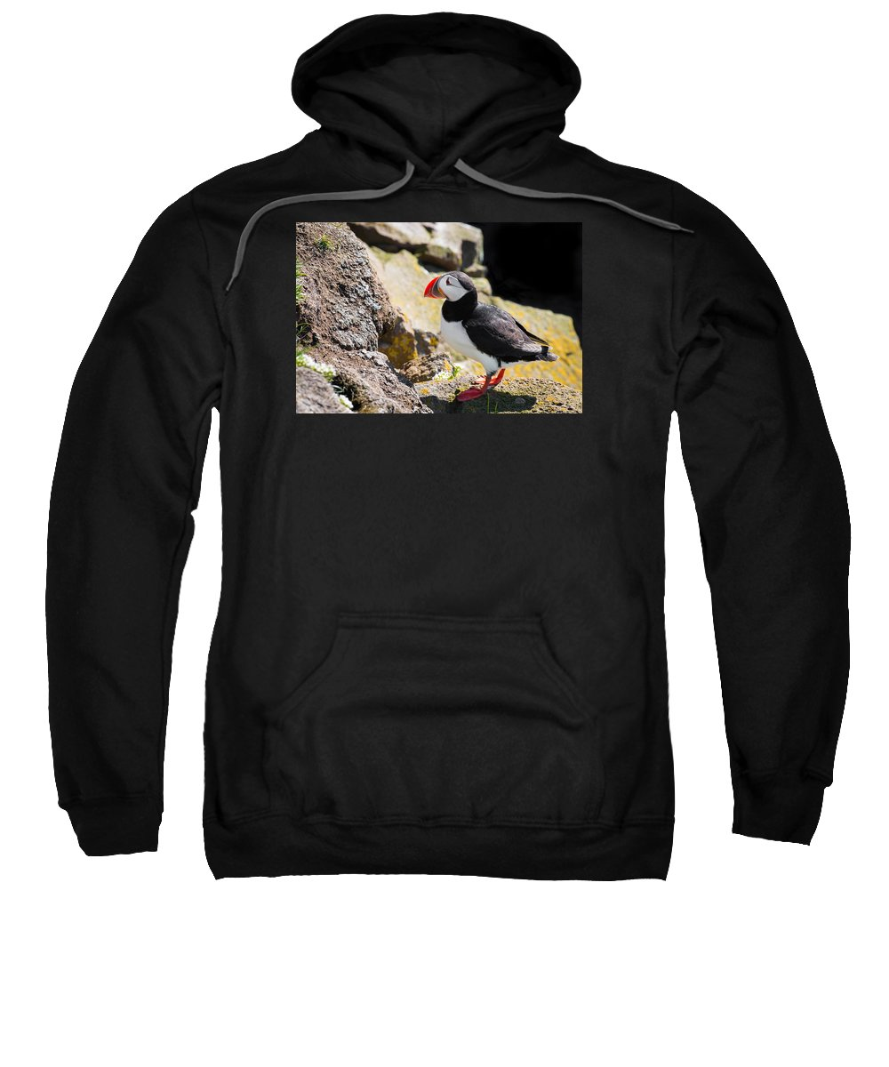 Puffin Sweatshirt featuring the photograph One Puffin In Iceland by Matthias Hauser