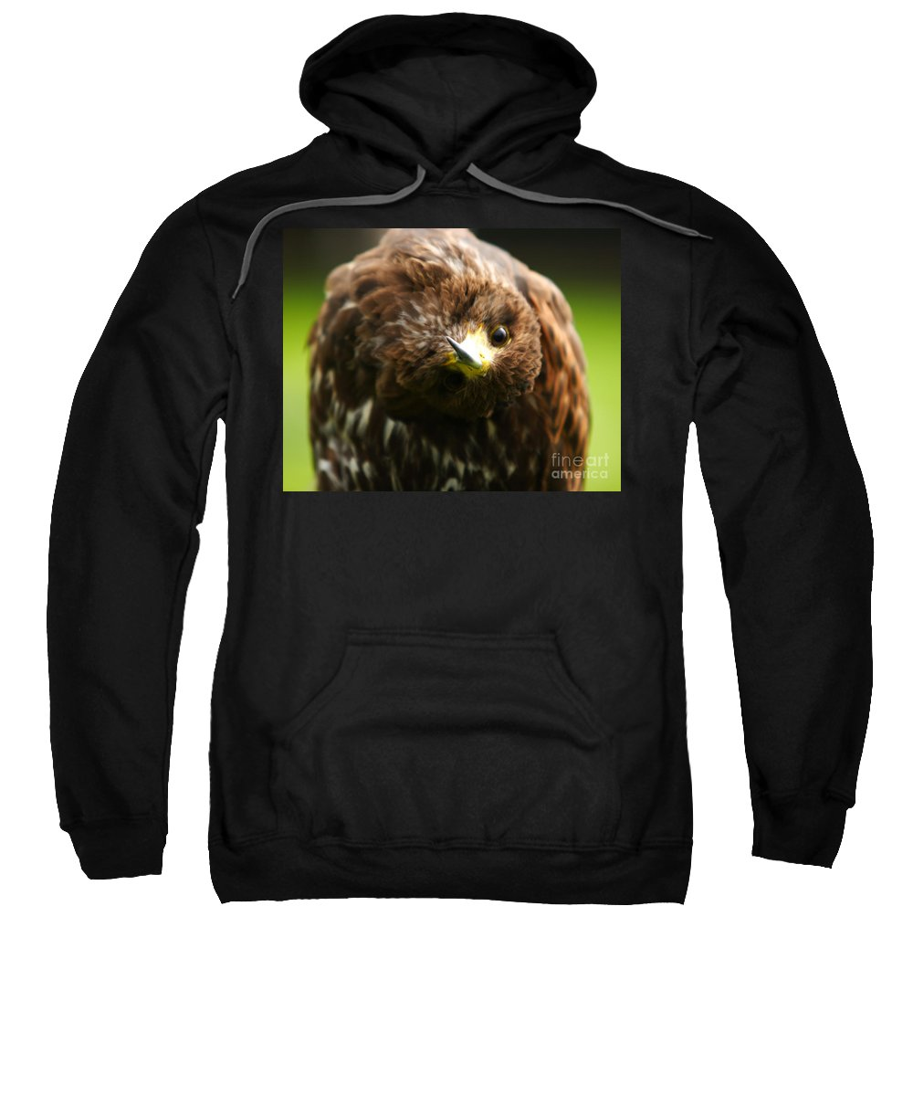Buzzard Sweatshirt featuring the photograph Oops I Have Gone Mad by Angel Ciesniarska