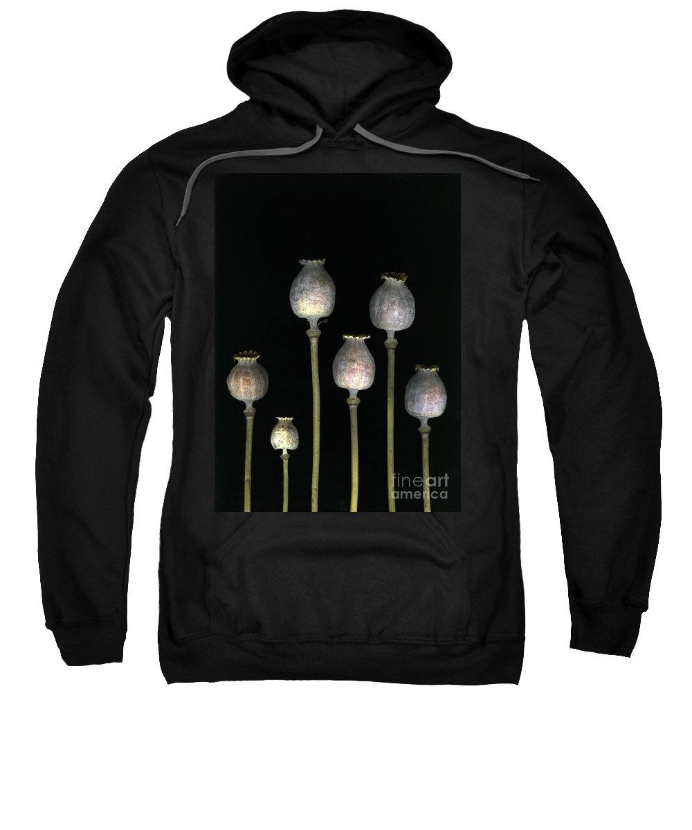 Scanography Sweatshirt featuring the photograph Opiates by Christian Slanec