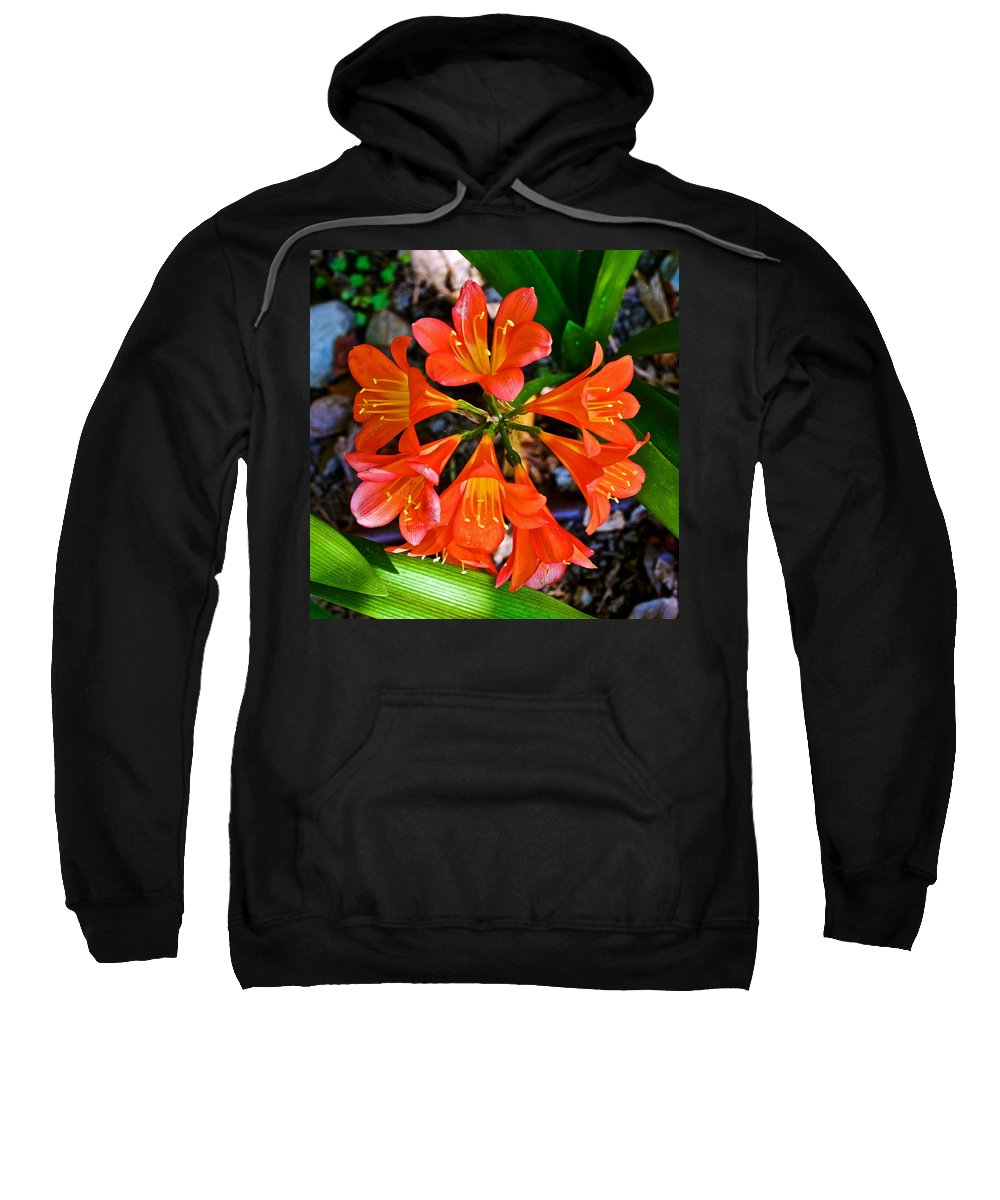 Orange Trumpet Flowers At Pilgrim Place In Claremont Sweatshirt featuring the photograph Orange Trumpet Flowers At Pilgrim Place In Claremont-california by Ruth Hager