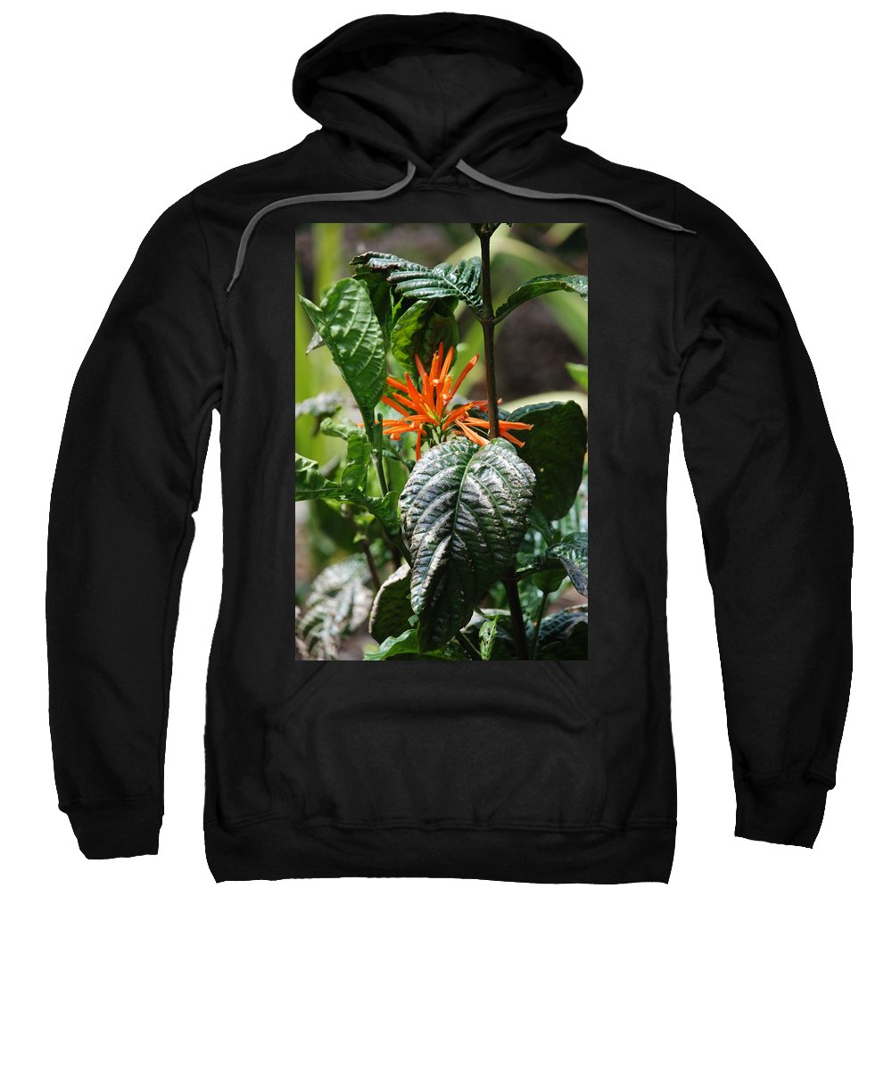 Banana Leaf Sweatshirt featuring the photograph Orange Plants by Rob Hans