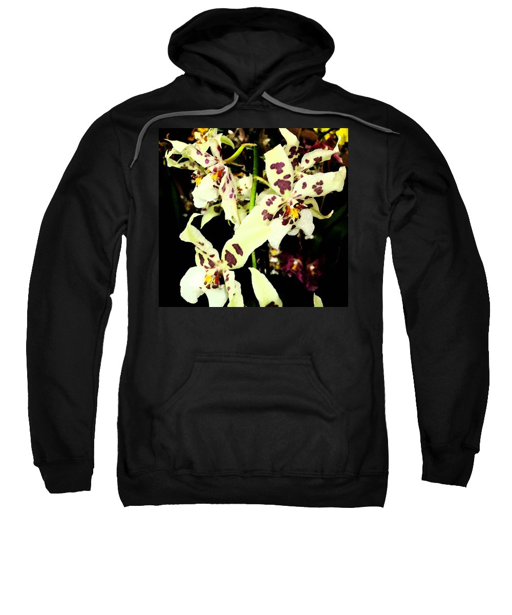 Orchid Sweatshirt featuring the photograph Orchid Fresco by Mindy Newman