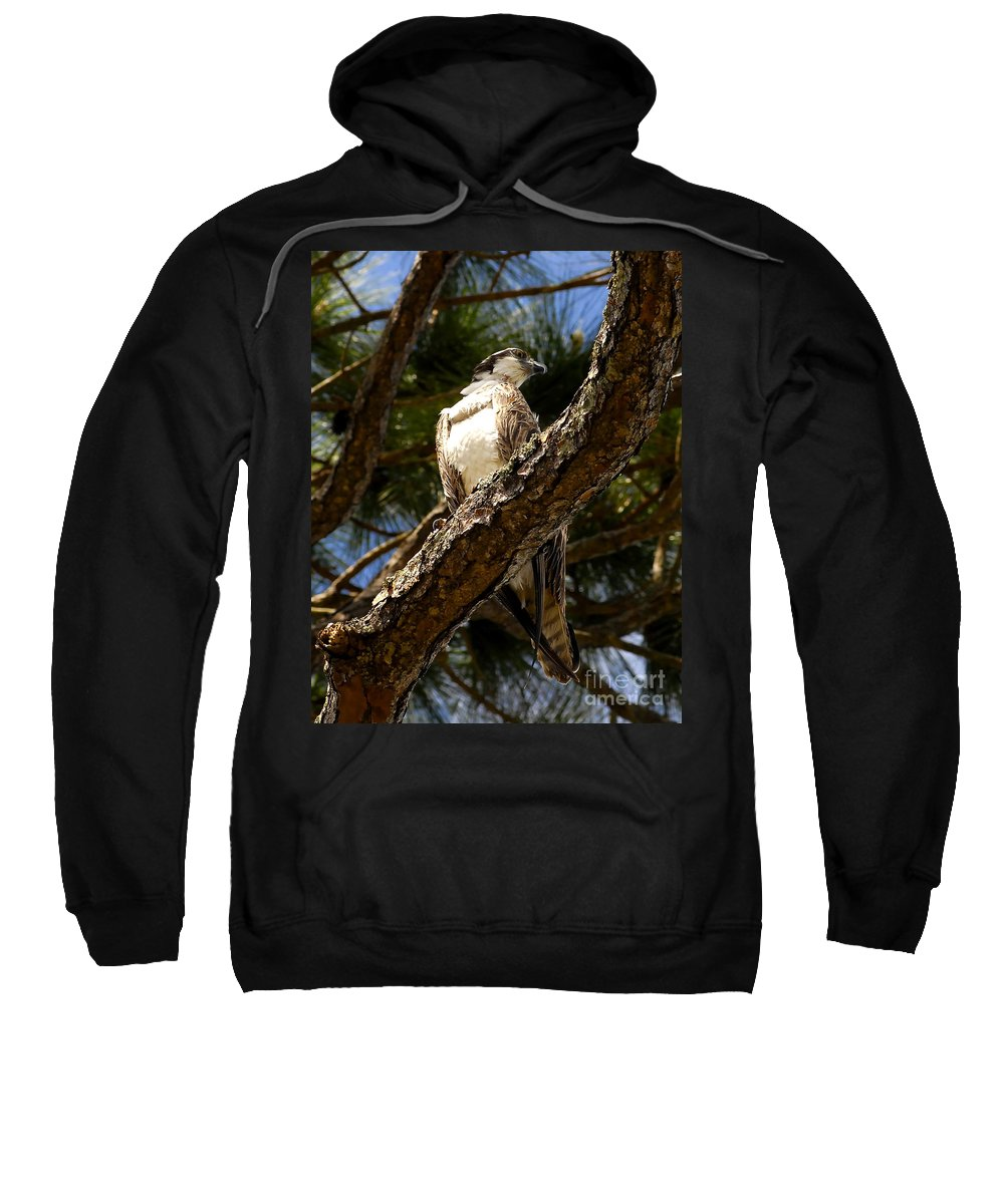 Osprey Sweatshirt featuring the photograph Osprey Hunting by David Lee Thompson