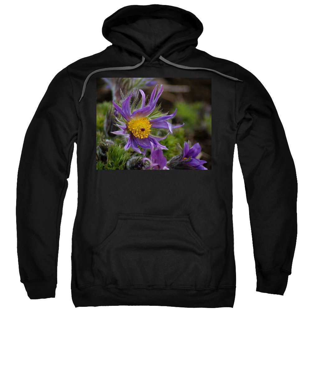 Flowers Sweatshirt featuring the photograph Otherworldly Flora by Ben Upham III
