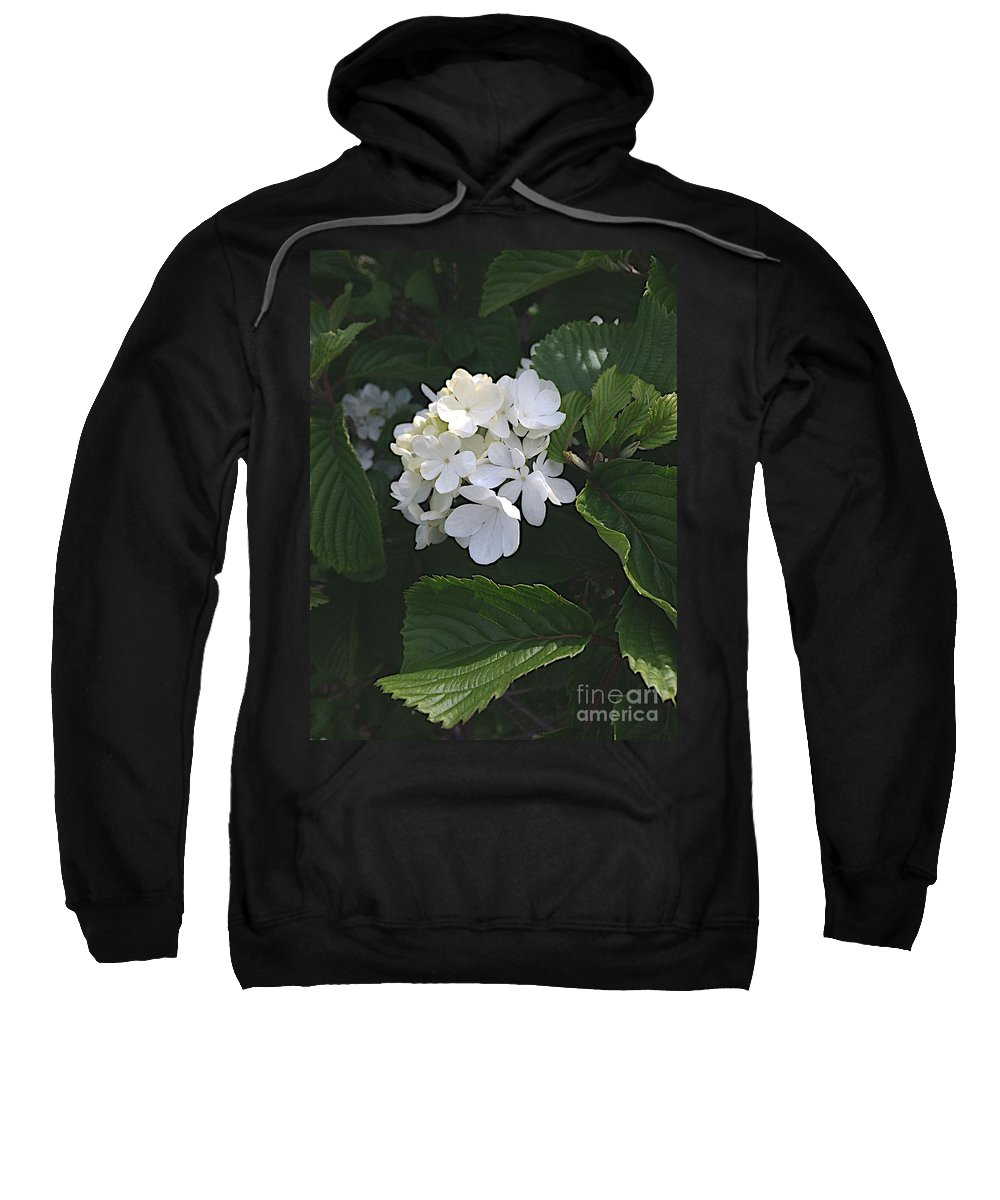 Blooms Sweatshirt featuring the photograph Out In The Wilds by Joseph Yarbrough