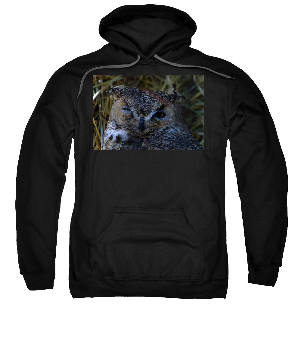 Owl Sweatshirt featuring the photograph Owl by Anthony Jones